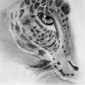 Portrait de Liosalfar